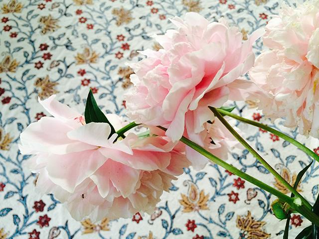 flower-vase-pale-pink-peony-blog-creativity-for-the-soul-blog