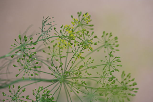 flower-vases-dill-close-up-blog-creativity-for-the-soul-blog