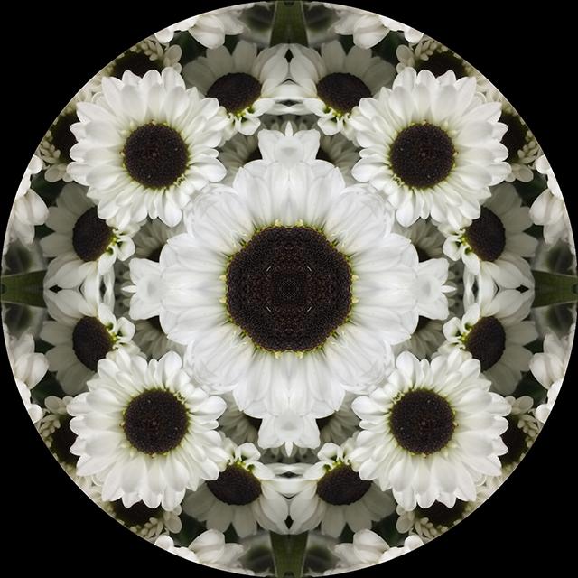 flower-mandala-circle-black-white-daisy-blog-creativity-for-the-soul-blog