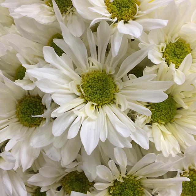 flower-mandala-white-daisy-blog-creativity-for-the-soul-blog