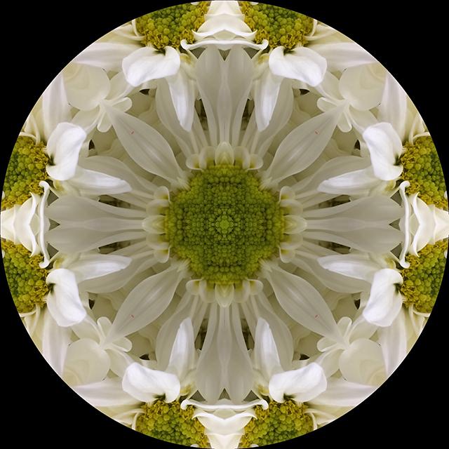 flower-mandala-white-daisy-circle-blog-creativity-for-the-soul-blog