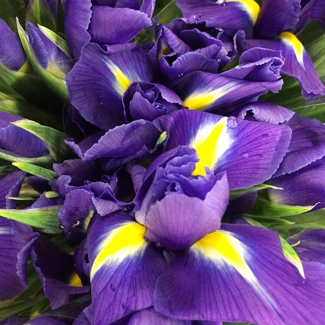 flower-mandalas-iris-blog-creativity-for-the-soul-blog