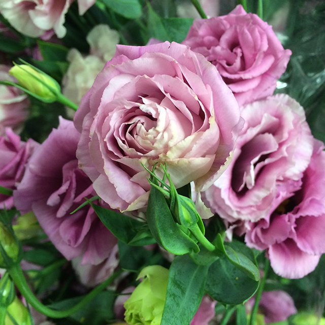 flower-mandalas-lisianthus-pink-blog-creativity-for-the-soul-blog