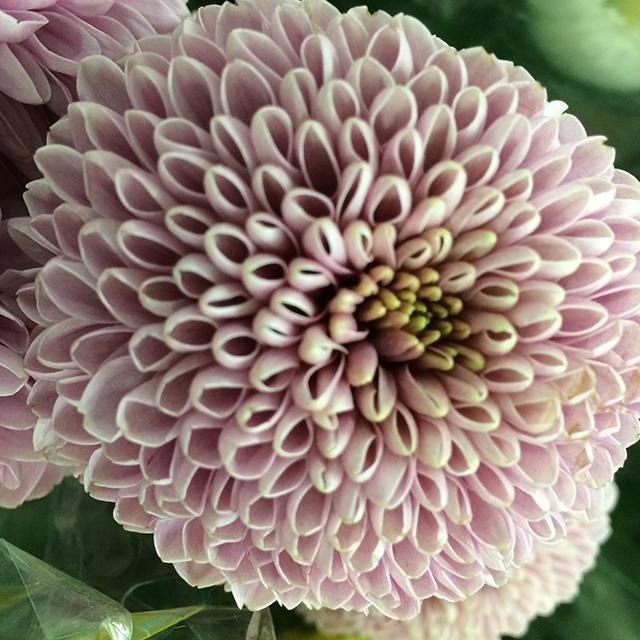 flower-mandalas-pink-carnation-blog-creativity-for-the-soul-blog