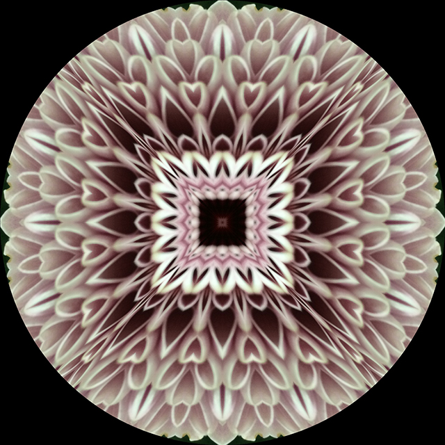 flower-mandalas-pink-carnation-circle-blog-creativity-for-the-soul-blog