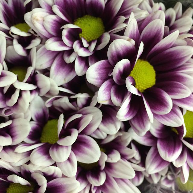 flower-mandalas-purple-green-daisy-blog-creativity-for-the-soul-blog
