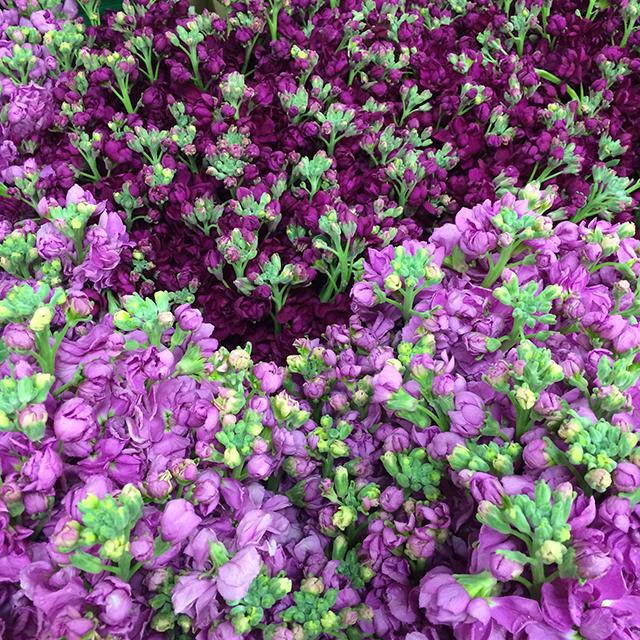 flower-mandalas-purple-stock-blog-creativity-for-the-soul-blog