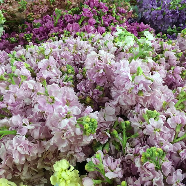 flower-mandalas-stock-purples-blog-creativity-for-the-soul-blog