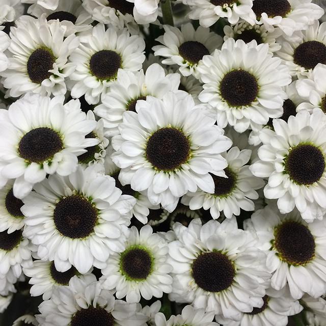 flower-mandalas-white-black-daisy-blog-creativity-for-the-soul-blog