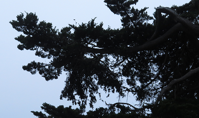 esalen-dancer-in-tree-blog-creativity-for-the-soul-blog