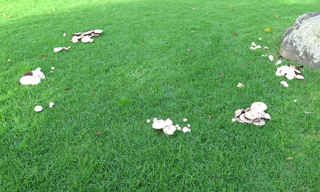 esalen-fairy-ring-mushrooms-blog-creativity-for-the-soul-blog