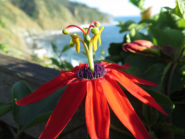 esalen-passion-flower-blog-creativity-for-the-soul-blog