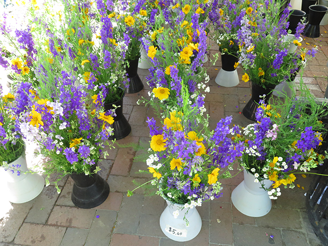 madison-farmers-market-blue-yellow-flowers-blog-creativity-for-the-soul-blog