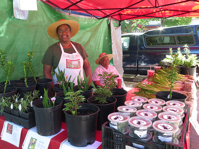 madison-farmers-market-plant-sellers-blog-creativity-for-the-soul-blog