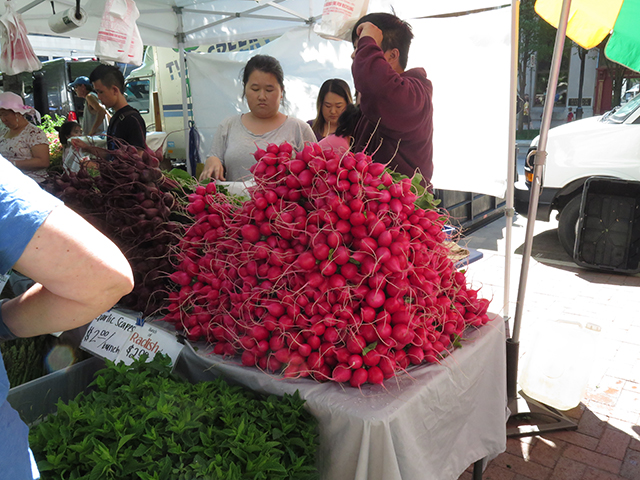 madison-farmers-market-radishes-blog-creativity-for-the-soul-blog