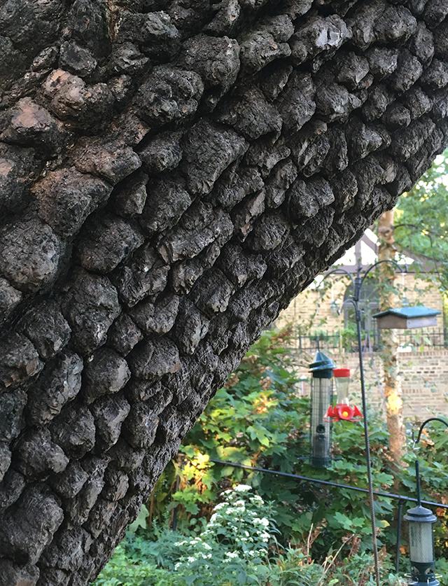 persimmon-bark-blog-creativity-for-the-soul-blog