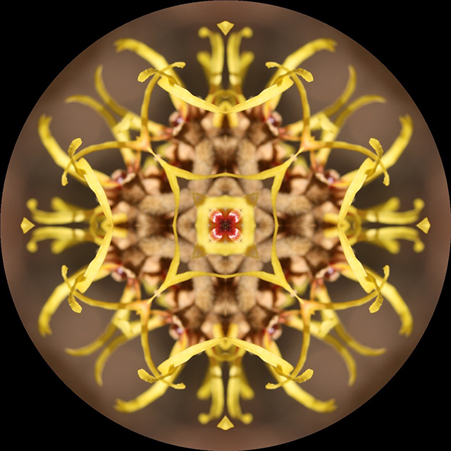 mandala-blog-kaleidagram-witch-hazel-1-blog-creativity-for-the-soul-blog