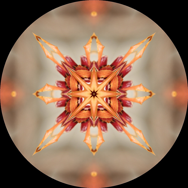 mandala-blog-light-witch-hazel-2-kaleidagram-blog-creativity-for-the-soul-blog