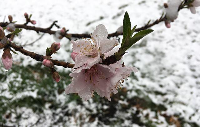 flower-freeze-nectarien-flower-blog-creativity-for-the-soul-blog