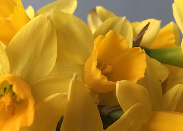 flower-freeze-vase-7-closeup-blog-creativity-for-the-soul-blog
