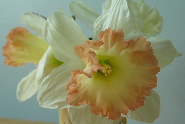 flower-freeze-vase-8-closeup-blog-creativity-for-the-soul-blog