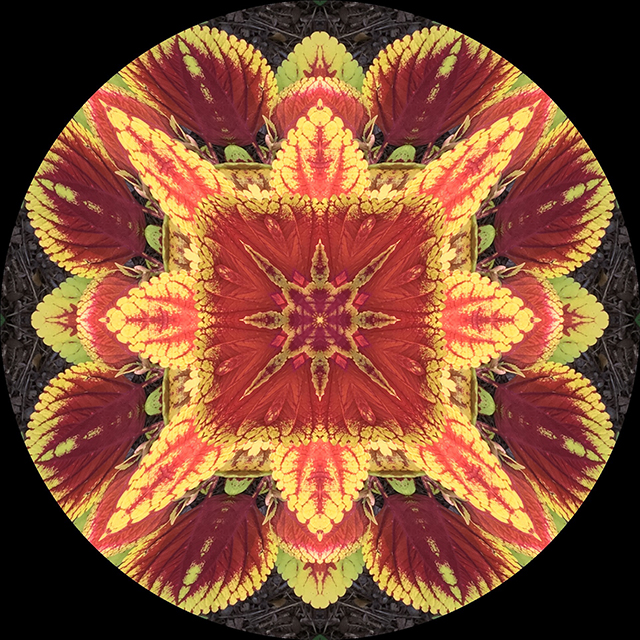 garden-mandalas-coleus-blog-creativity-for-the-soul