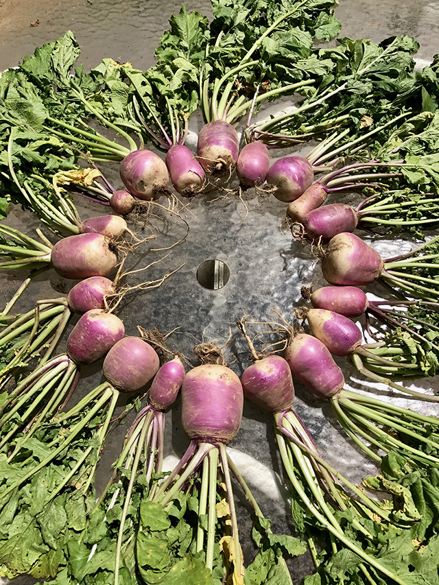 mandala-sharing-turnips-blog-creativity-for-the-soul-blog