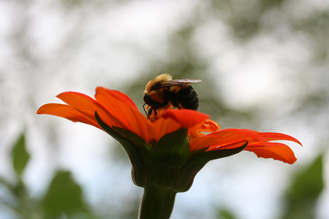 garden-to-be-bee-tithonia-blog-creativity-for-the-soul-blog