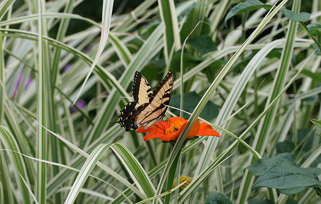 garden-to-be-butterfly-blog-creativity-for-the-soul-blog