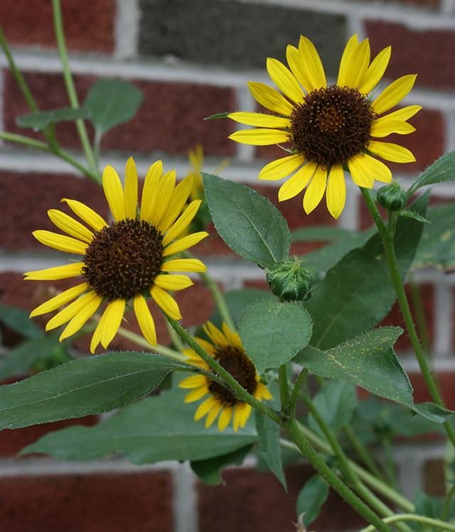garden-to-be-sunflower-blog-creativity-for-the-soul-blog