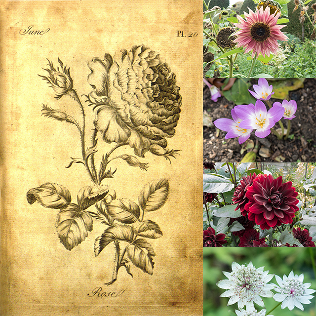 english-flowers-old-new-collage