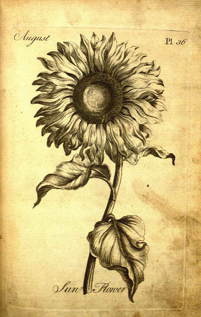 sunflower-colouring-book-blog-creativity-for-the-soul