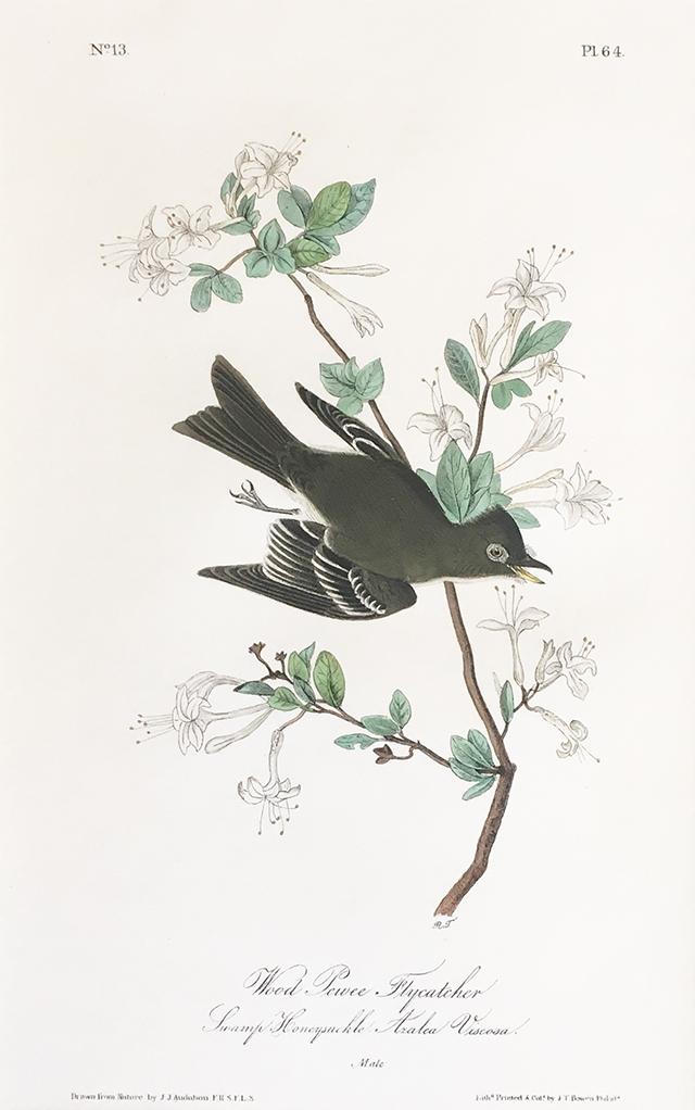 audubon-wood-pewee-blog-creativity-for-the-soul-blog