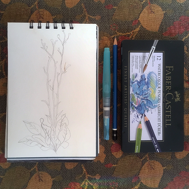 drawing-prairie-dock-art-materials-blog