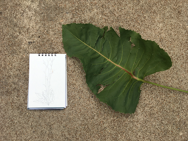 drawing-prairie-dock-leaf-blog-creativity-for-the-soul-blog