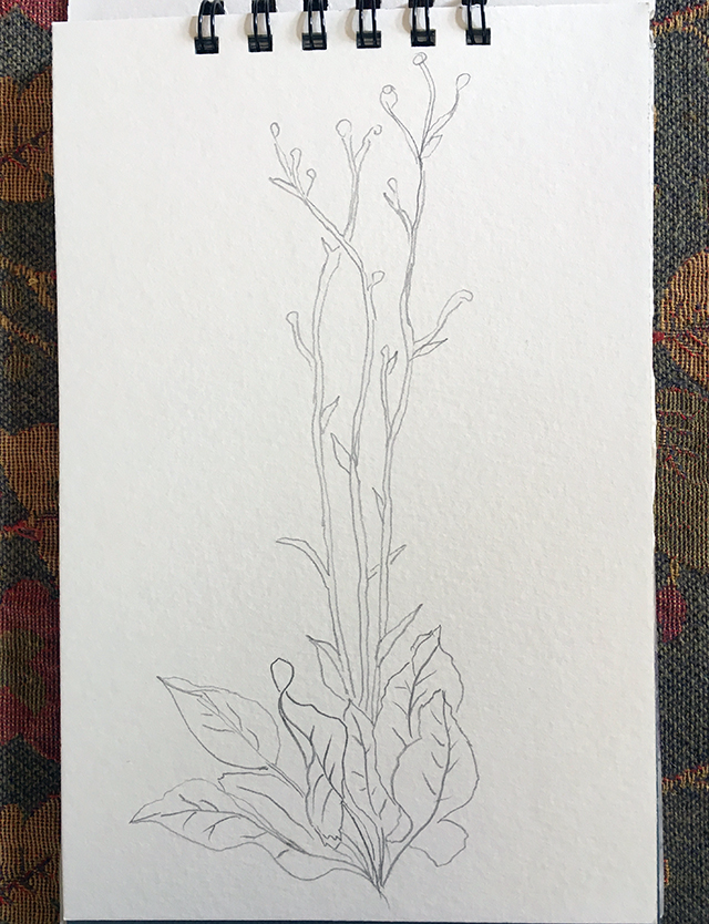 prairie-dock-drawing-pencil=blog-creativity-for-the-soul-blog
