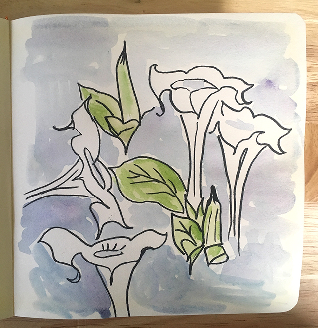 datura-drawing-blog-creativity-for-the-soul-blog