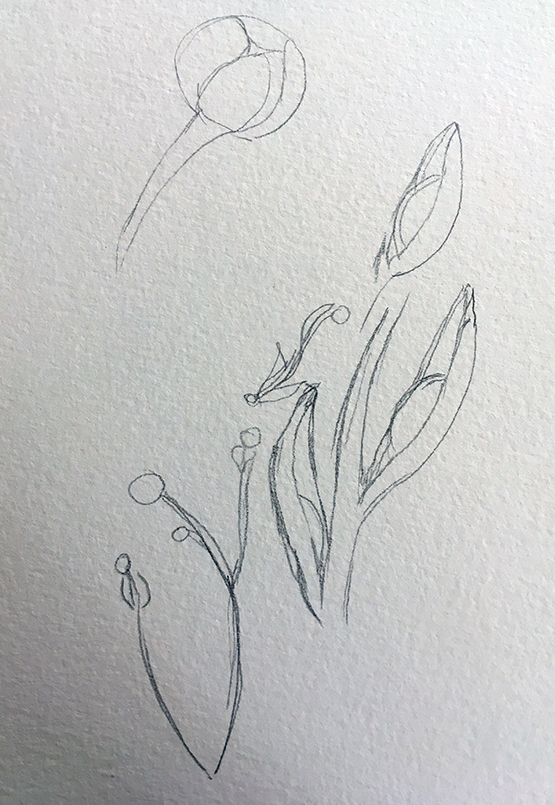 prairie-doc-bud-drawing-blog-creativity-for-the-soul-blog