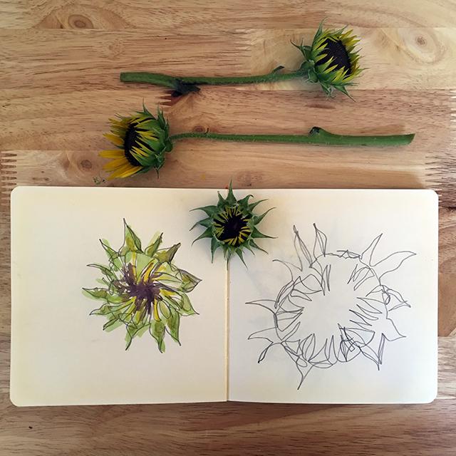 sunflower-bud-drawings-blog-creativity-for-the-soul-blog