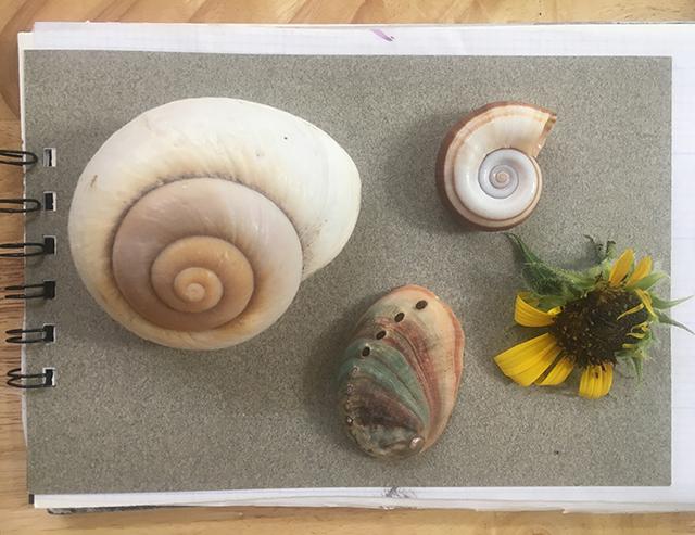 shells-flower-read-blog-creativity-for-the-soul-blog